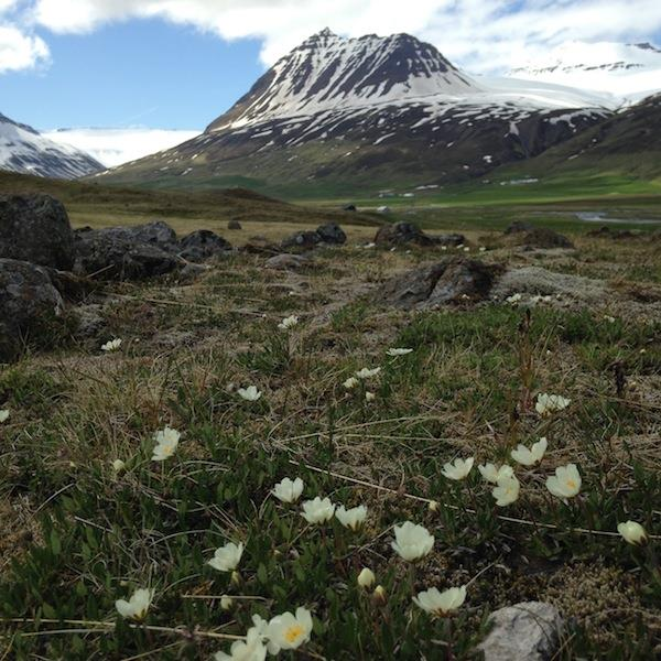 Knitting Vacations Iceland : Knitting holiday north iceland mountainguides is