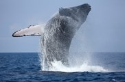 Life of Whales- Whale watching tours