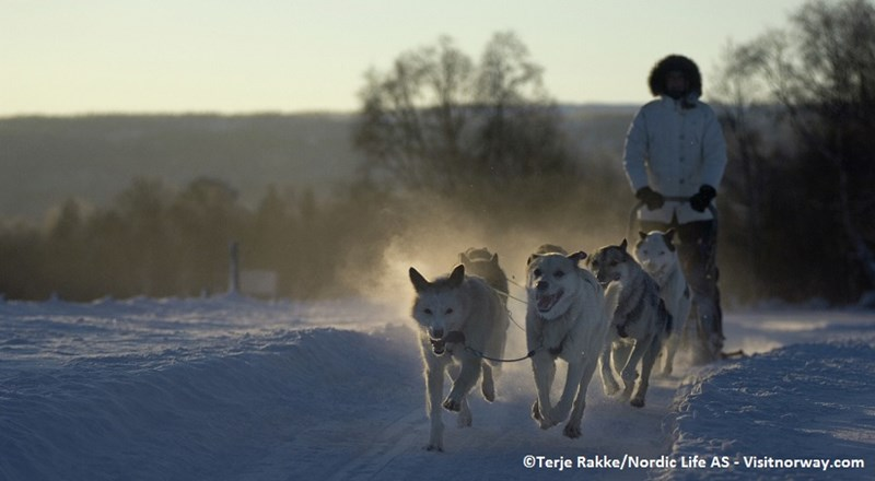 Dog-sledding-Roros-022007-99-0098_1500.jpg