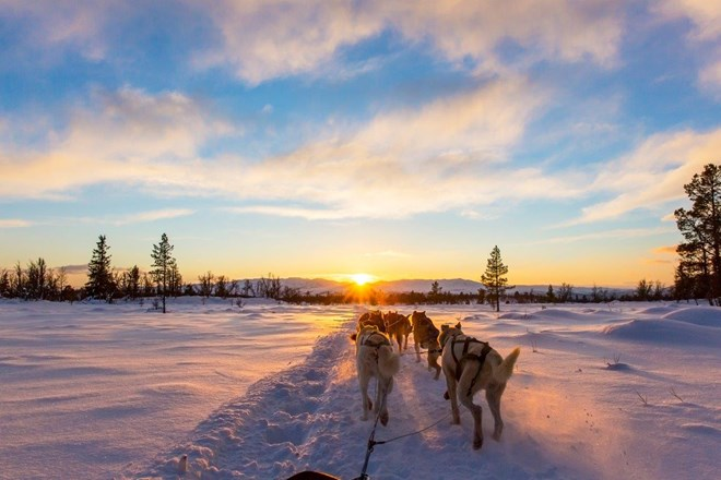 Dog sledding with huskies in beautiful sunset.jpg