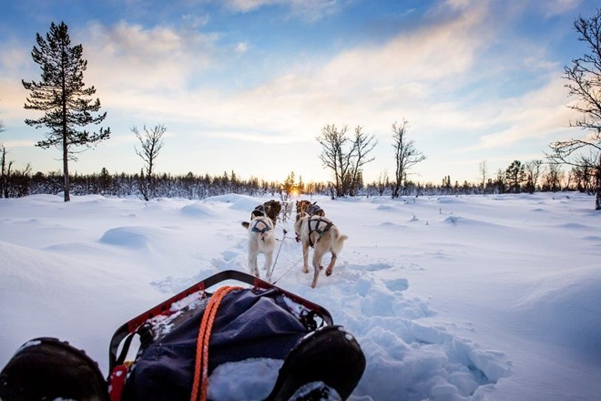 Dog sledding with huskies in Norway.jpg